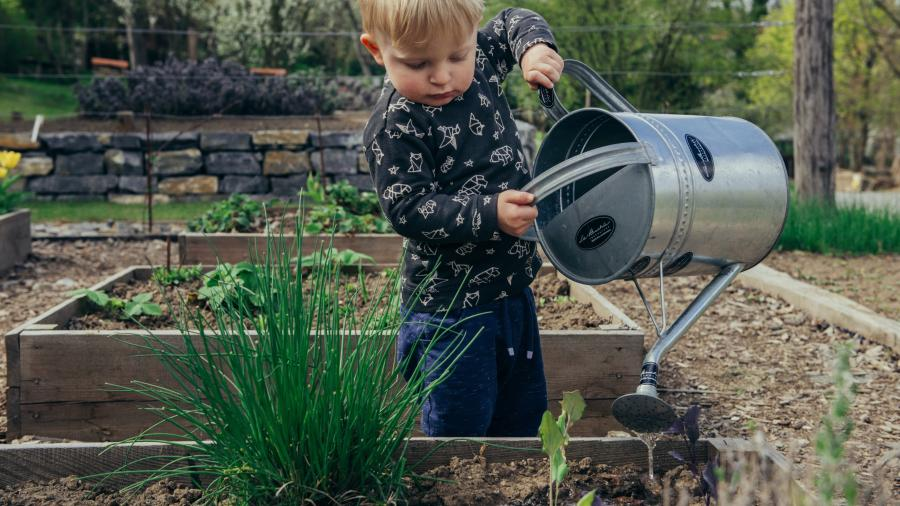 Barn vander planter i køkkenhave