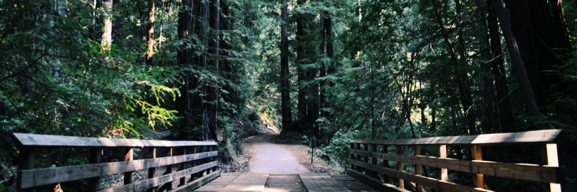 en vej der fører over en bro og dybt ind i en skov